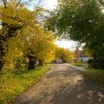 Maulbeerbäume im Maulbeerweg